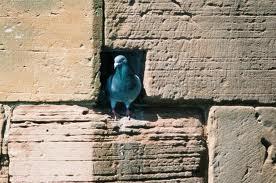 Pigeonhole